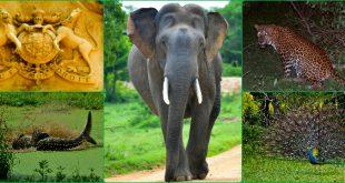 1-night-2-days-tour-to-yala-safari